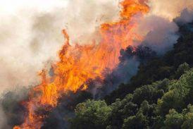 Φωτιά στο βελανιδοδάσος κοντά στον Πρόδρομο Ξηρομέρου