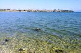Άλλη μια χελώνα καρέτα καρέτα χτυπημένη στον Αμβρακικό στην περιοχή του Δρυμού Βόνιτσας (φωτο)