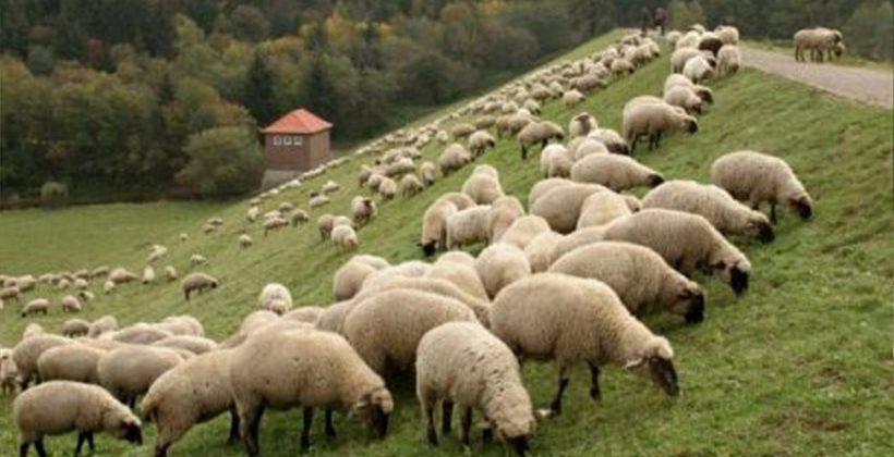 Πληρώνονται σήμερα 29 εκατ. ευρώ σε 7.000 δικαιούχους της  Βιολογικής Κτηνοτροφίας