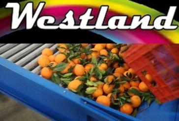 """Ζητά προσωπικό το συσκευαστήριο εσπεριδοειδών """"Westland Fruit ΕΠΕ"""""""