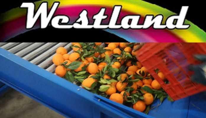 Το συσκευαστήριο εσπεριδοειδών στη Γουριά ζητά γεωπόνο ή τεχνολόγο τροφίμων και γυναίκες συσκευάστριες