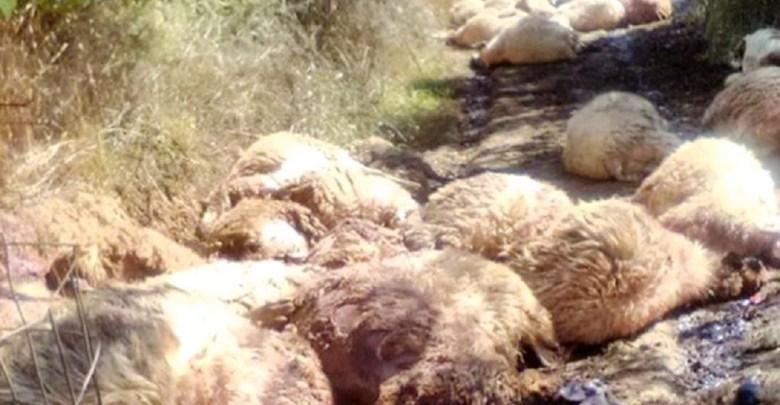 100 ζώα νεκρά από τους εμπρησμούς στη Σκάλα- Ανθρωποκυνηγητό στα ορεινά της Ναυπακτίας για τον δράστη