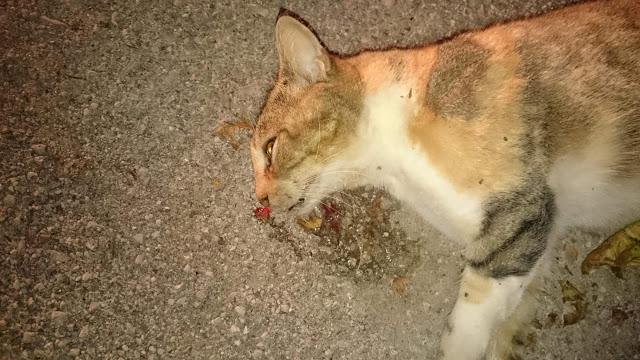 Δικογραφία κατά αγνώστου για τις νεκρές γάτες από φόλες στη Βόνιτσα