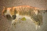 Δικογραφία για νέες φόλες σε ζώα στο Αγρίνιο