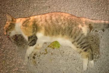 Δικογραφία για νέες φόλες σε γάτες στο Αγρίνιο