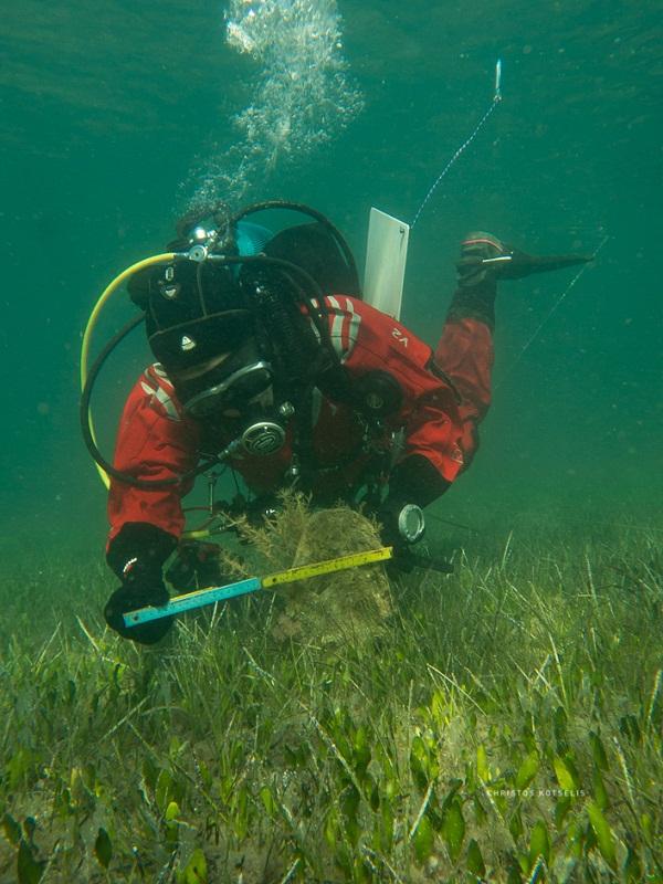 Μια ματιά κάτω από την επιφάνεια της λιμνοθάλασσας Μεσολογγίου