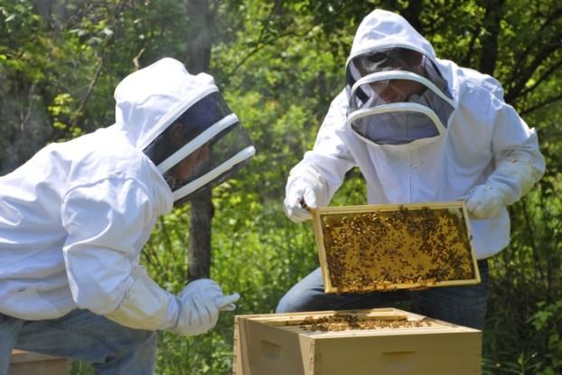 Κάλεσμα σε μελισσοκόμους της Αιτωλοακαρνανίας για συμμετοχή σε δυο δράσεις
