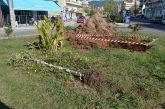 Άγιος Κωνσταντίνος Αγρινίου: παράπονα για τη «μεταφορά» μιας βελανιδιάς