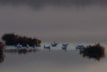 Μοναδικής ομορφιάς στιγμιότυπα από τη λιμνοθάλασσα στο Μεσολόγγι (εικόνες)