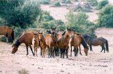 Σκότωσαν άγρια άλογα του Πεταλά στην περιοχή της Στράτου