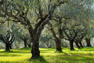 Προγραμματική Σύμβαση Περιφέρειας και ΓΕΩΤΕΕ για την προστασία της ελαιοπαραγωγής στη Δυτ. Ελλάδα
