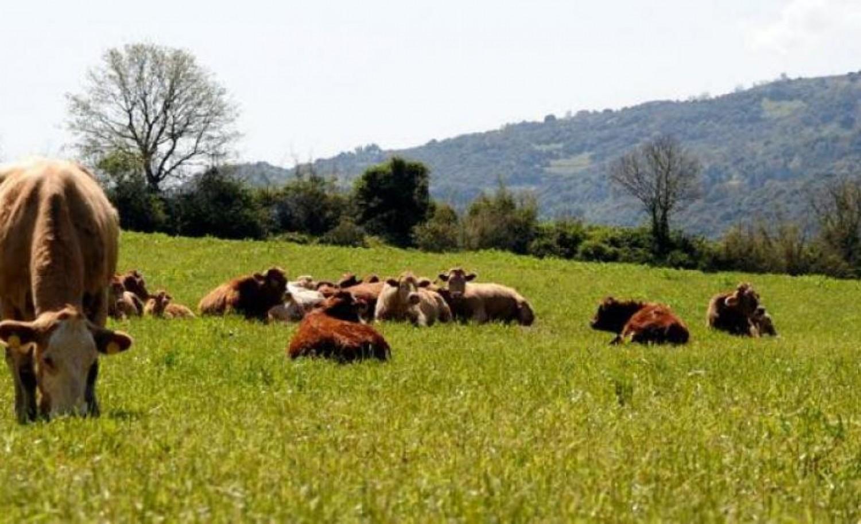 ΕΛΣΤΑΤ: Σε εξέλιξη η απογραφή Γεωργίας – Κτηνοτροφίας 2021