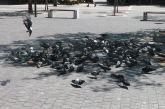Συμβουλεύει τους πολίτες για τα περιστέρια ο δήμος Αγρινίου