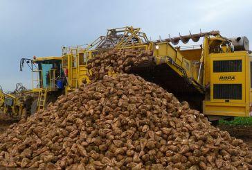 Πιστώνονται σήμερα οι λογαριασμοί των δικαιούχων συνδεδεμένης ενίσχυσης ζαχαροτεύτλων