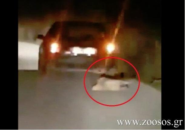 Kαταγγελία: Έσερνε σκύλο με το αυτοκίνητο στον δρόμο Βόνιτσα- Άκτιο
