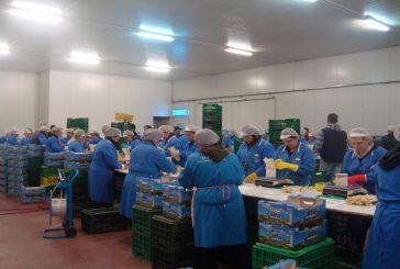 Πρόσληψη εργατών για συσκευαστήριο σπαραγγιών στη Νεάπολη