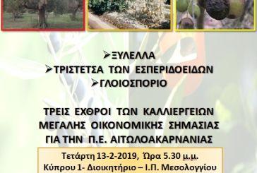 Εσπεριδοειδή: κρούσμα και στην Αιτωλοακαρνανία του ιού της Τριστέτσας-ενημερωτική συνάντηση