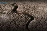 Βίντεο: Φίδι μέσα στο Φλεβάρη σε δρόμο στην Αιτωλοακαρνανία!