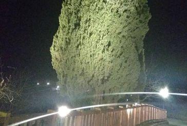 Άγραφα: Φωτίστηκε το επιβλητικό «Κυπαρίσσι της Πρασιάς» (φωτο)