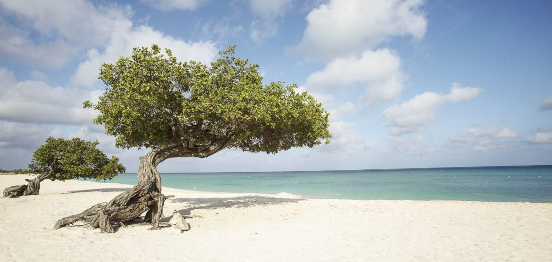 Σύψας: Μέτρα έως του χρόνου το καλοκαίρι