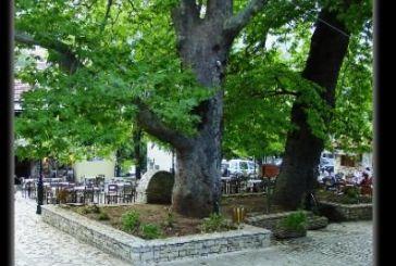 Σύσκεψη στο Μεσολόγγιγια την ασθένεια του μεταχρωματικού έλκους του πλατάνου