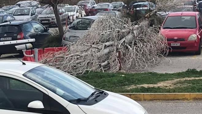 Πάτρα: Τεράστιο δέντρο έπεσε σε αυτοκίνητα στο πάρκινγκ του Πανεπιστημιακού Νοσοκομείου – Από θαύμα δεν θρηνήσαμε θύματα