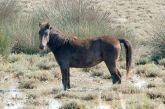 Τα άγρια άλογα του Αχελώου στην περιοχή του Λούρου