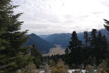 Αναβρασμός σε Περδικάκι και Πετρώνα ενόψει υλοτομήσεων σε δάση τους