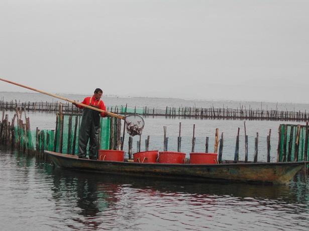 Σε καλό δρόμο η ένταξη της παραδοσιακής αλιείας της λιμνοθάλασσας στα στοιχεία Άυλης Πολιτιστικής Κληρονομιάς