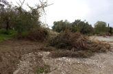 Τα αντιπλημμυρικά μπλόκια και οι κίνδυνοι για την πανίδα στην παραποτάμια ζώνη της Νέας Αβώρανης