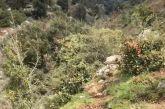Ριγάνι Ναυπακτίας: Η ανάσυρση της σορού του άτυχου άνδρα (βίντεο)