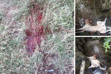 Ξηρόμερο: κατήγγειλε τον ξάδερφο του μέσω  facebook πως σκότωσε σκύλο-δικογραφία από την Αστυνομία