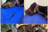 Ναύπακτος: σώθηκε σκυλί που βρέθηκε με κομμένο λαιμό -το είχαν δεμένο με σύρμα