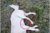 Κτηνωδία στο Αγρίνιο: Θανάτωσαν σκύλο με ψαροντούφεκο!