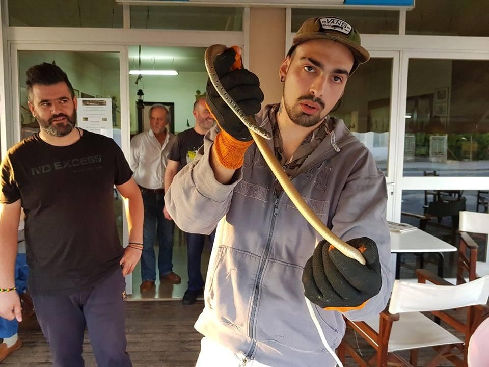 """""""Σεμινάριο""""για το φίδι σαΐτα σε καφενείο της Αβώρανης"""