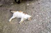 Δικογραφία για φόλα σε γάτα στο Άκτιο