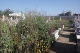 Εικόνες εγκατάλειψης στο κοιμητήριο της Βόνιτσας