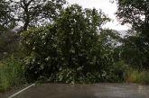 Οι δυνατοί άνεμοι ξερίζωσαν πλατάνι στην Άνω Βασιλική Ναυπακτίας (βίντεο)