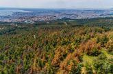 Αγιασμός για «σωτηρία» από το έντομο που απειλεί το δάσος του Σέιχ Σου