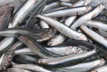 Παράνομη αλιεία και σαρδέλας στον Αμβρακικό Κόλπο