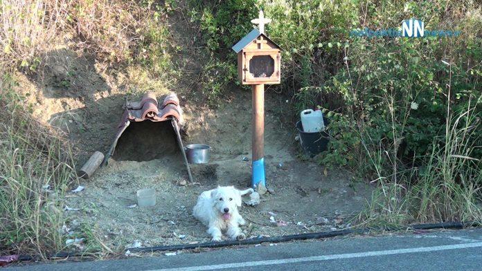 Ο «Χάτσικο» της Ναυπακτίας: Σκυλάκος ζει δίπλα στο εικόνισμα του αφεντικού του  (βίντεο)