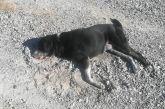 Κι άλλος σκύλος νεκρός από φόλα στην περιοχή του Αγρινίου