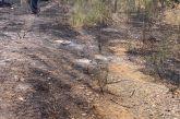 Φωτιά στην Ε.Ο. Αντιρρίου – Ιωαννίνων κοντά στην Αμφιλοχία