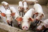 Κατάσχεση φορτίου χοίρων χωρίς υγειονομικά παραστατικά στην περιοχή της Αμφιλοχίας