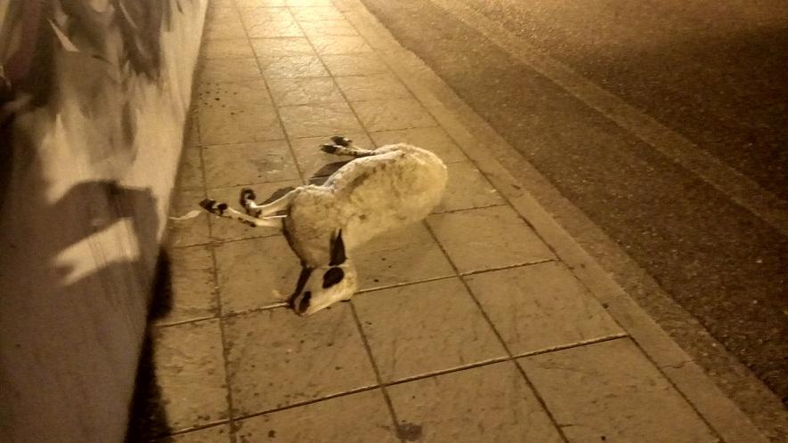 Έγινε το…αναμενόμενο τροχαίο στο Αγρίνιο: όχημα τράκαρε με πρόβατο