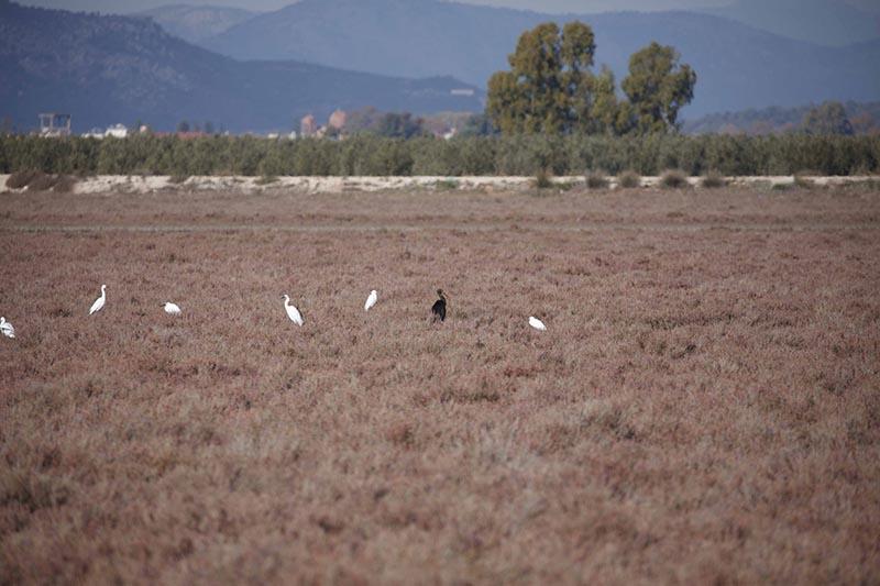 Ο ΦΔ Λιμνοθάλασσας – Ακαρνανικών ενημερώνει τους αγρότες για την προστασία της ορνιθοπανίδας μέσω επιδοτήσεων