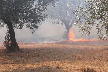 Καινούργιο: Υπό έλεγχο η φωτιά στα Τζιφέικα