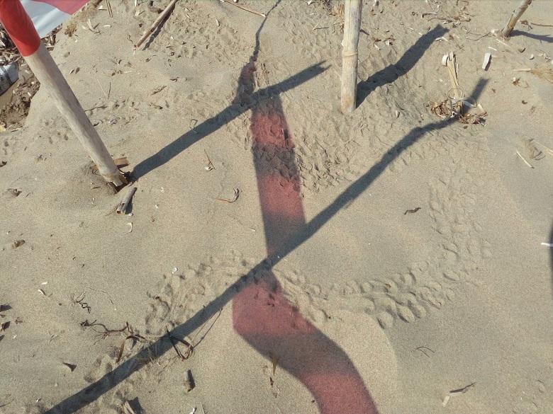 Τα πρώτα χελωνάκια στην παραλία του Λούρου για το 2019