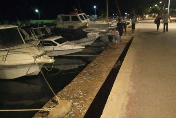 Ψάρια βγήκαν στη στεριά στον Αστακό