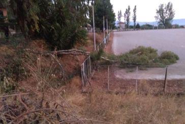 Με το πρώτο αεράκι έπεσε δένδρο στο γήπεδο στα Τριαντέικα